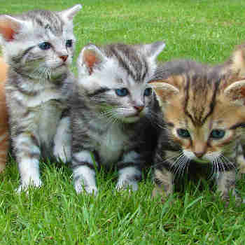 three kittens in grass