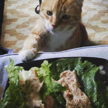 kitty wants salad