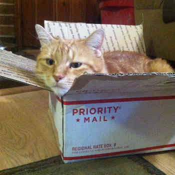priority mail cat